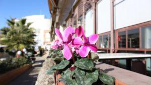 San Valentín y el Mercado Lonja del Barranco: la cita romántica más deliciosa